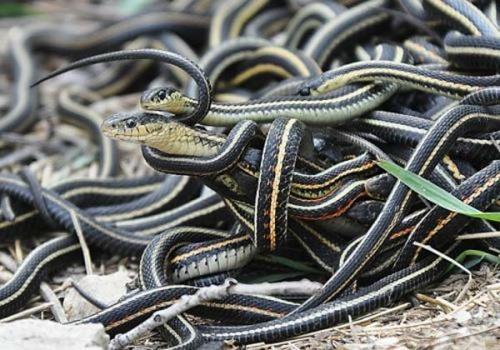 Mẹo hay không để rắn vào nhà