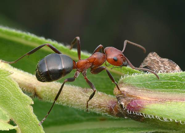 Phương pháp diệt kiến