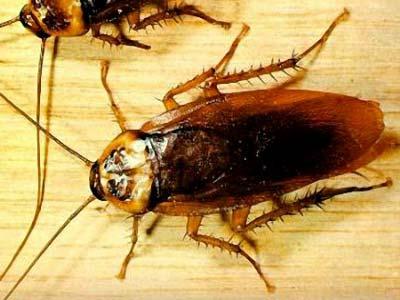 Diệt côn trùng bằng bốn chất tự nhiên