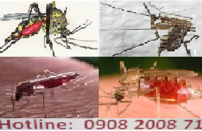 công ty dịch vụ diệt muỗi hiệu quả