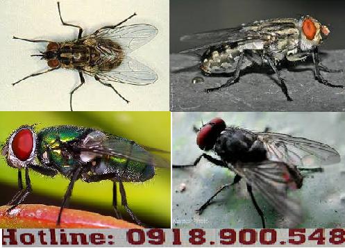 công ty dịch vụ diệt ruồi uy tín
