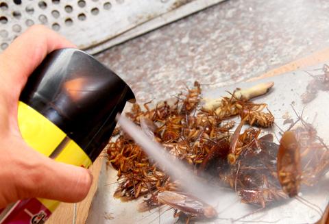 Mối nguy hiểm khi diệt côn trùng không đúng cách