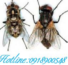 Description: http://www.impe-qn.org.vn/impe-qn/vn/upload/info/image/1155894966015_3.jpg